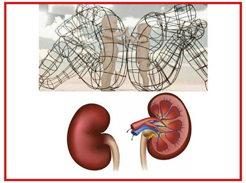 Das Innere Kind und die Niere